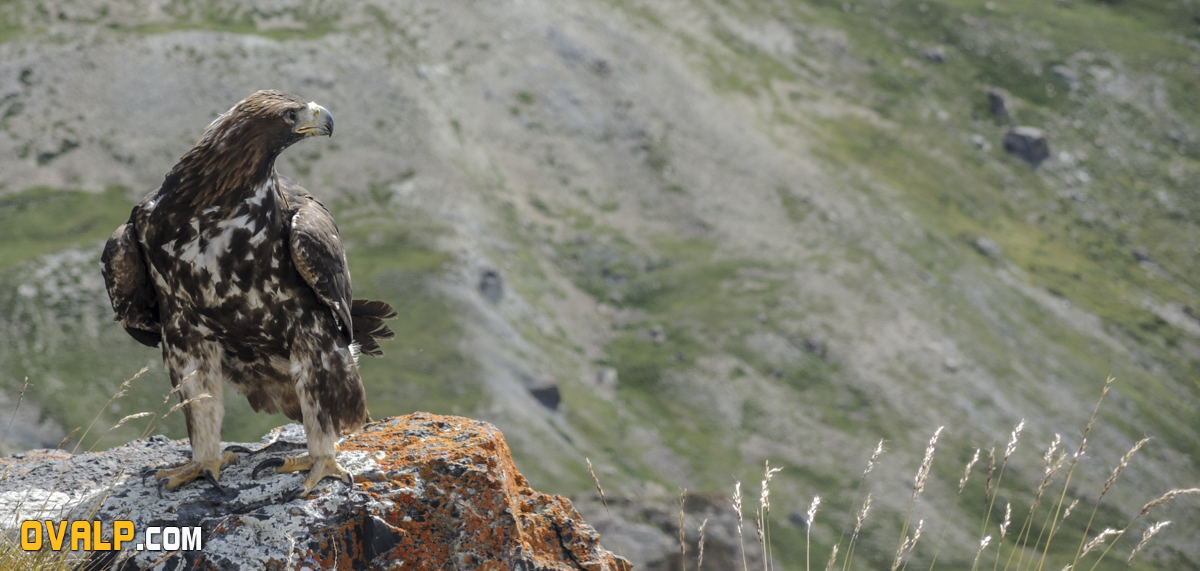 Lacher Aigle Galibier 9