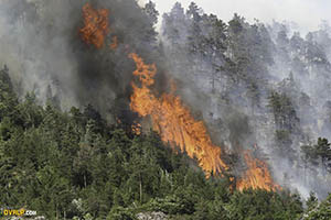 Forest fires in the Alps